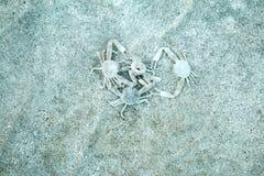 螃蟹编组,男性和女性 免版税库存图片