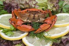 螃蟹膳食 免版税库存图片