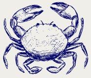 螃蟹草图 图库摄影