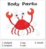 螃蟹身体局部 库存图片
