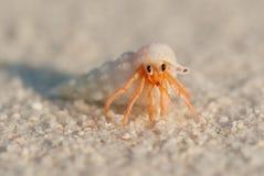 螃蟹重点隐士嘴荷兰 免版税图库摄影
