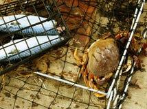 螃蟹陷井 库存图片