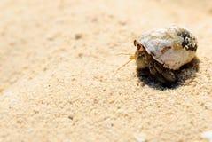 螃蟹隐士沙子白色 免版税库存图片