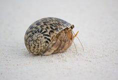 螃蟹隐士沙子 库存照片