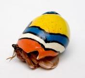 螃蟹隐士 免版税库存照片
