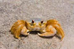 螃蟹鬼魂沙子 库存照片