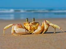 螃蟹鬼魂 库存图片
