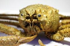 螃蟹黄色 库存图片