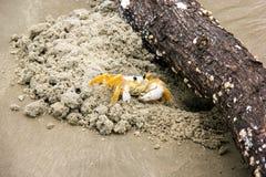 螃蟹-玛丽亚farinha 库存照片