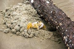 螃蟹-玛丽亚farinha 库存图片
