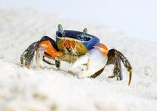 螃蟹 免版税库存照片