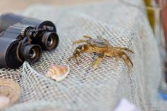 活螃蟹 库存图片