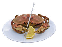 螃蟹dungeness 库存照片