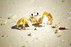 螃蟹Guardalavaca海滩古巴 免版税库存照片