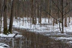 融解水和绿色青苔 免版税图库摄影