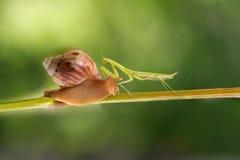 螳螂和蜗牛在葡萄树见面 免版税图库摄影