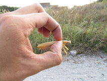螳螂在手中 免版税图库摄影