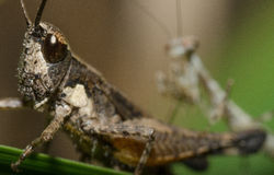 螳螂搜索 库存照片