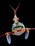 螳螂青蛙 库存图片