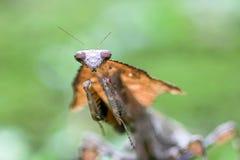 螳螂,动物,宏指令, bokeh,昆虫,自然, 库存照片