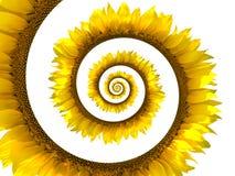 螺旋向日葵 免版税图库摄影