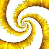 螺旋向日葵 免版税库存照片
