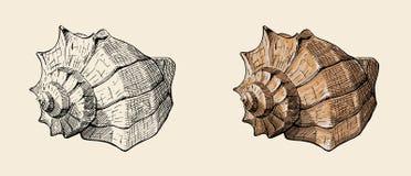 螺旋巧克力精炼机海壳,手拉的墨水例证,储蓄传染媒介 库存图片