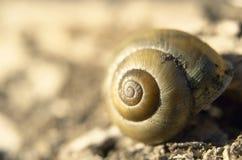 螺旋扭转的壳宏观特写镜头视图  免版税图库摄影