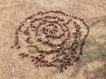 螺旋锥体由孩子在春天形成了 免版税图库摄影