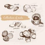 螺母的收集 库存例证