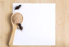 蟋蟀吃和烹调的食物粉末昆虫在有白皮书大模型的木匙子在木背景这是好来源  库存照片
