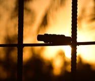 蟋蟀响铃保持了隔绝与日落背景照片 免版税库存图片