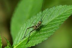 蟋蟀在庭院里 免版税库存照片
