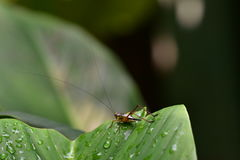 蟋蟀在庭院里 免版税图库摄影