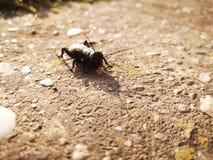 蟋蟀 库存照片