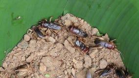 蟋蟀 影视素材