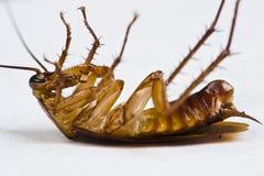 蟑螂中断 库存照片