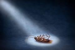 蟑螂停止的昆虫 库存照片