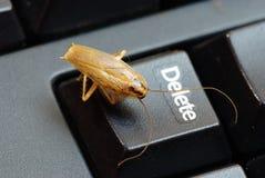 蟑螂删除想法 库存图片