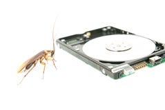 蟑螂和硬盘驱动器 免版税库存照片