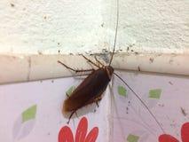 蟑螂在卫生间里 图库摄影