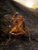 蟑螂小提琴手