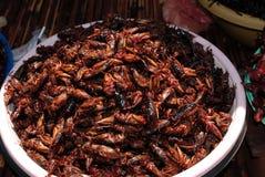 蟑螂烤了 免版税库存照片