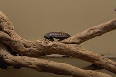 蟑螂爬行 图库摄影