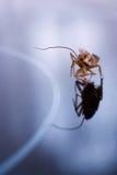 蟑螂运行中 库存图片