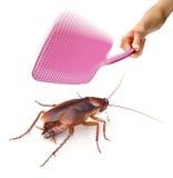 蟑螂飞行虫苍蝇拍 库存照片