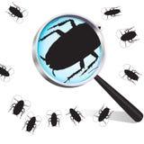 蟑螂 库存图片