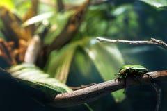 蟑螂 库存照片
