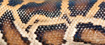 蟒蛇模式蛇 免版税库存图片