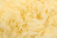 从蟒蛇的软的黄色羽毛 图库摄影